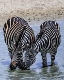 Safari Day 1-17