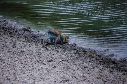 Safari Day 1-18