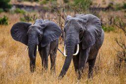 Safari Day 1-47