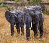 Safari Day 1-48