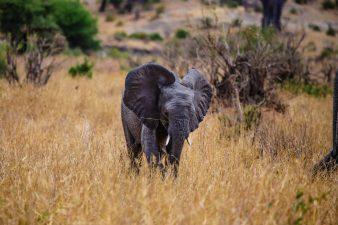 Safari Day 1-57
