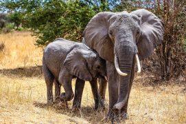 Safari Day 1-71