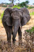 Safari Day 1-78