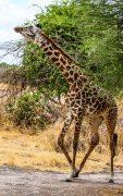 Safari Day 1-88
