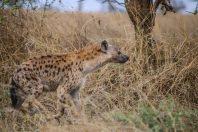 Safari Day 3-124
