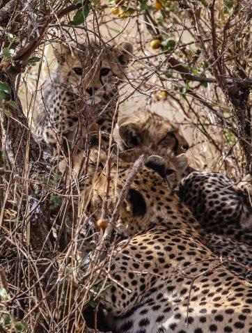 Safari Day 3-15-2