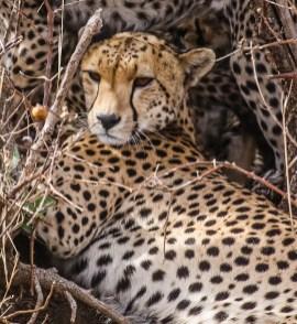 Safari Day 3-18-2