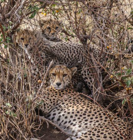Safari Day 3-20-2