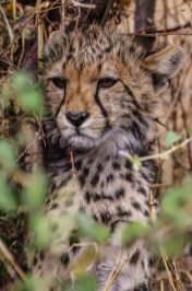 Safari Day 3-34