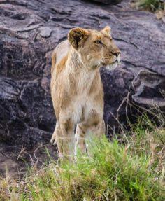 Safari Day 3-48