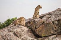 Safari Day 3-73