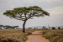Safari Day 3-92