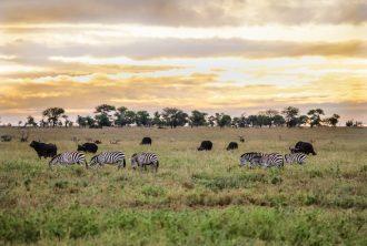 Safari Day 4-12