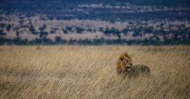 Safari Day 4-20