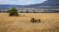 Safari Day 4-30
