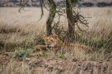 Safari Day 4-51