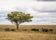 Safari Day 4-58