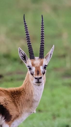 Safari Day 4-67