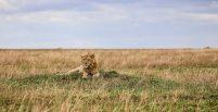 Safari Day 4-82