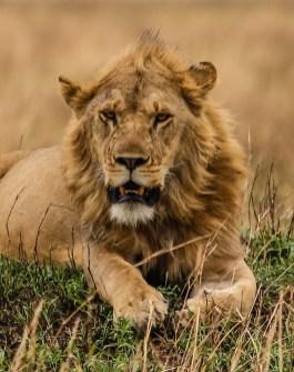 Safari Day 4-86