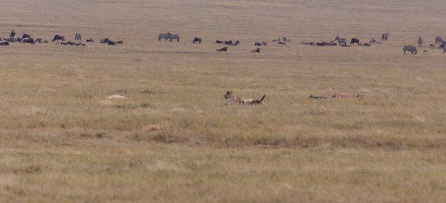 Safari Day 5-40