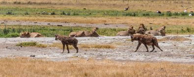 Safari Day 5-55