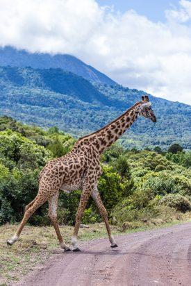 Safari Day 6-40
