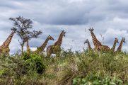 Safari Day 6-68