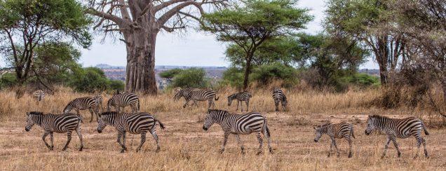 Safari Day 7-12