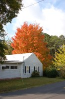 Harvest Moon® Sugar Maple Fall Color