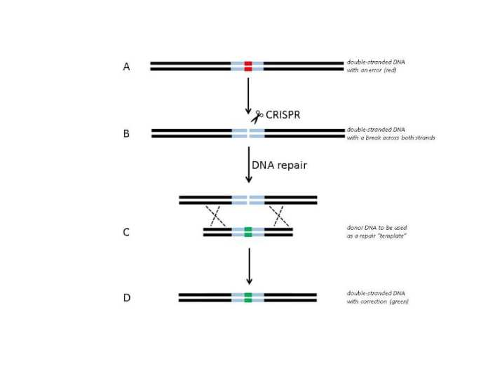 Editing the Human Genome: With Great Power There Must Also Come Great Responsibility