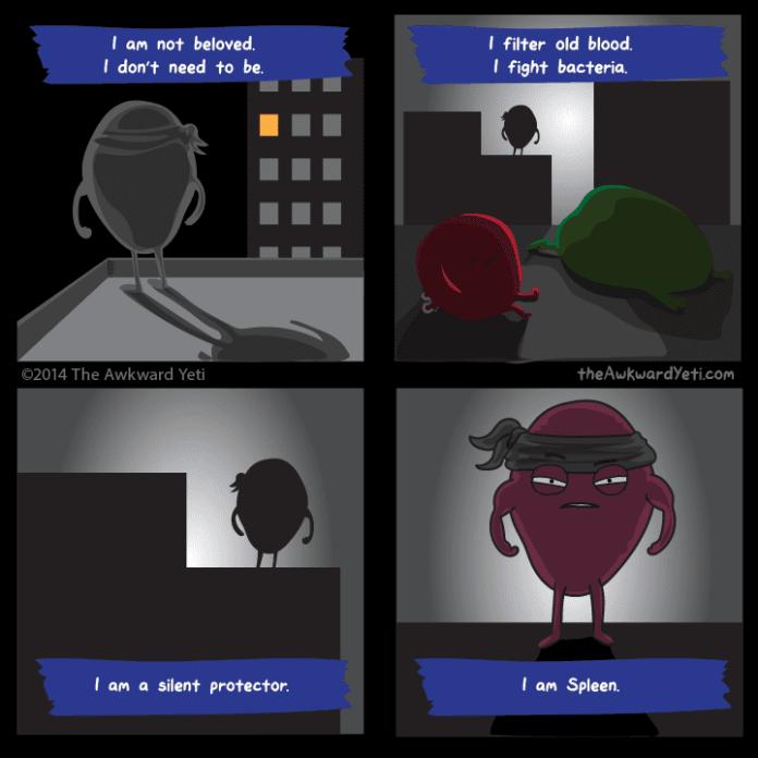 Spleen.png