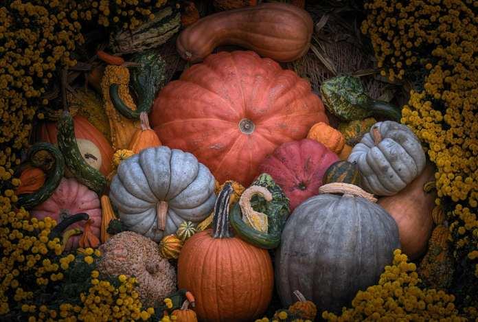 pumpkinmenagerie