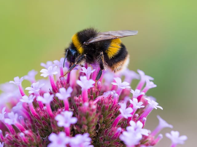 A Lesson in Un-BEE-lieveable Insect Intelligence