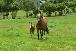 800px-Horse_&_Baby_Horse_(12096397534)