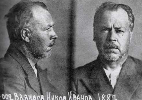 800px-Vavilov_in_prison.jpg