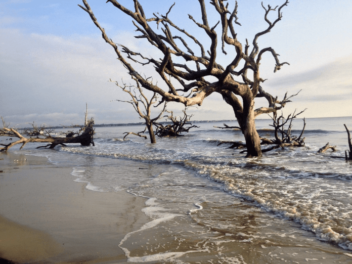 The undead ghost forests of Georgia