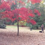 photograph of our yard in North Carolina, a great place to live.
