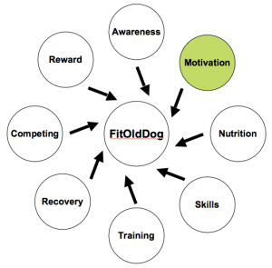 The FitOldDog Training Wheel moves from the study of awareness of what we are to determination of why we do what we do. From: http://goo.gl/Es6PF