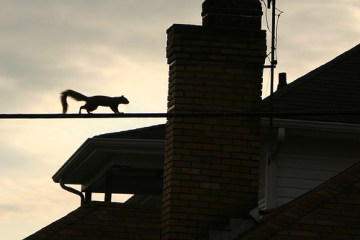 Photo of squirrel walking on a power line led to thoughts on valium