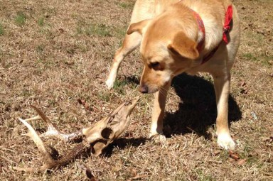 Willbe with deer skull, looking death in the face.