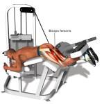FitOldDog's Favorite Hamstring Stretch (Lengthening) Exercise