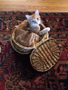 FitOldDog's cat in basket