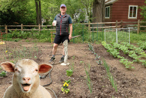 FitOldDog in his vegetable garden, to save the animals.