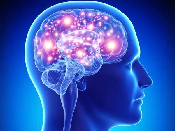 Slikovni rezultat za brain