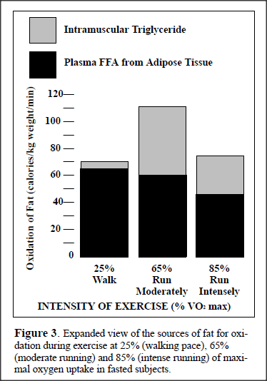 FAT METABOLISM DURING EXERCISE (3/4)