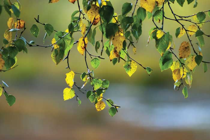 Boulder County Tree Care