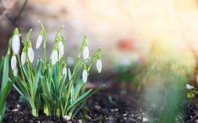 Warm soil to jump start spring