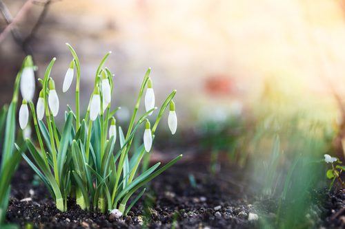 Warm soil to jump start spring