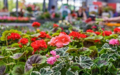 Area plant sales abound